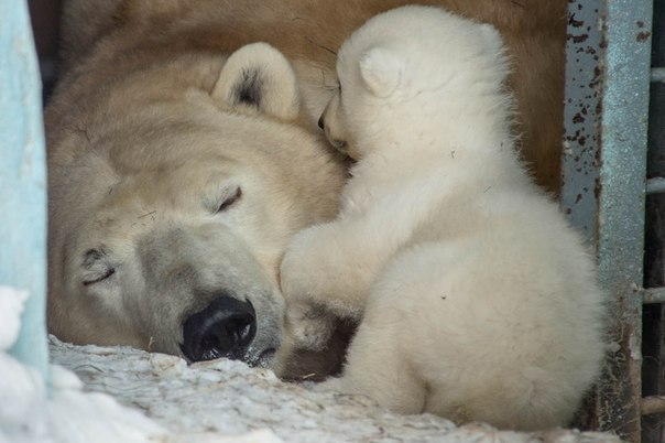 Безумная любовь мамы