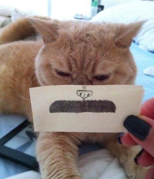 Прикольная фотосессия с котэ