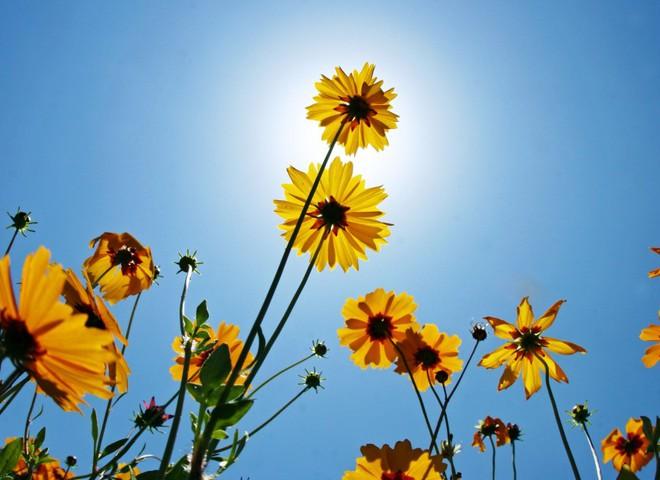 красивые картинки на рабочий стол природа цветы № 512015 без смс