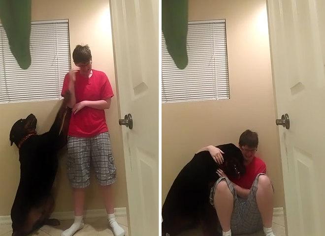 Пес спасает хозяйку с синдромом Аспергера