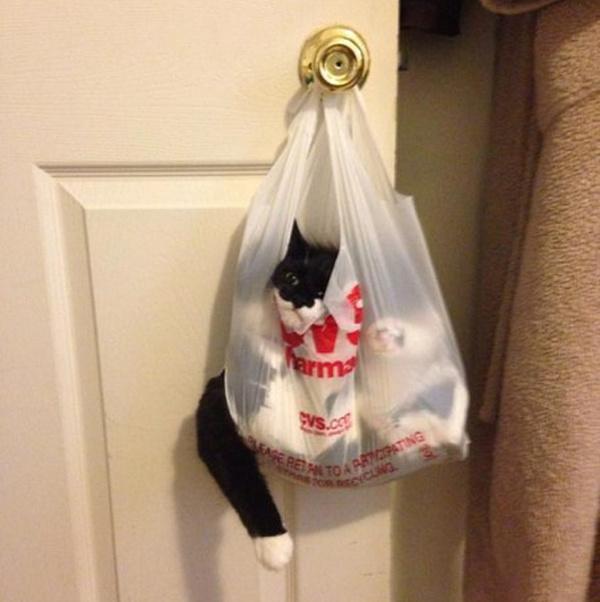 10 котов, которых жизнь завела в тупик