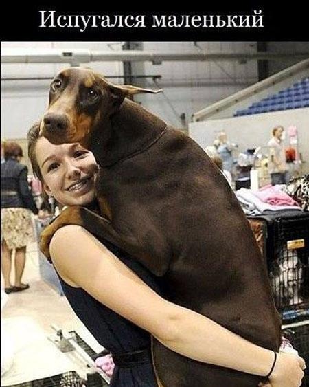 Позитивная фотка с собакой-испугакой