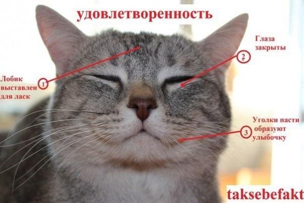 Как узнать, врет вам кошка или нет?