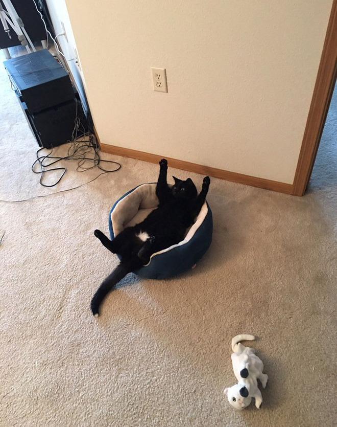 Дал коту кошачьей мяты, второй час он в шоке