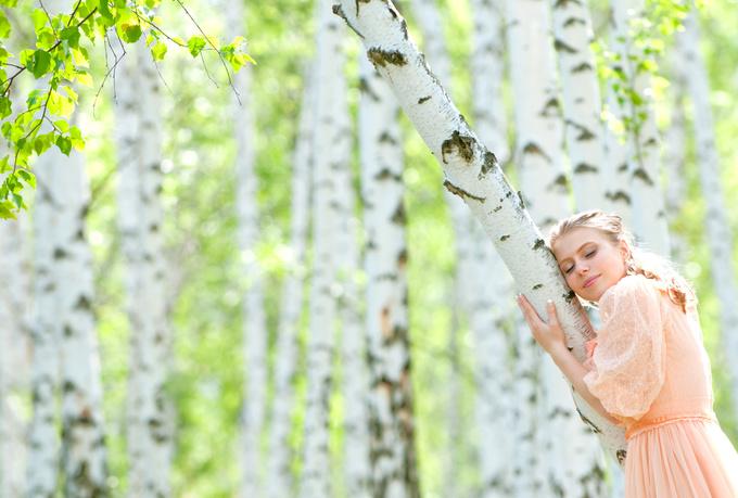 Биоэнергия дерева