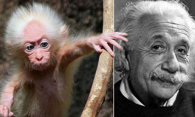 Эйнштейн и его маленький друг