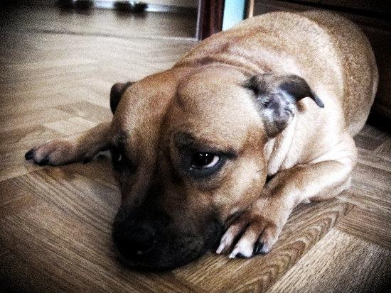 Милые виноватые собаки