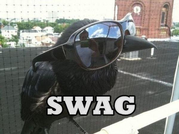 Подборка swag птичек