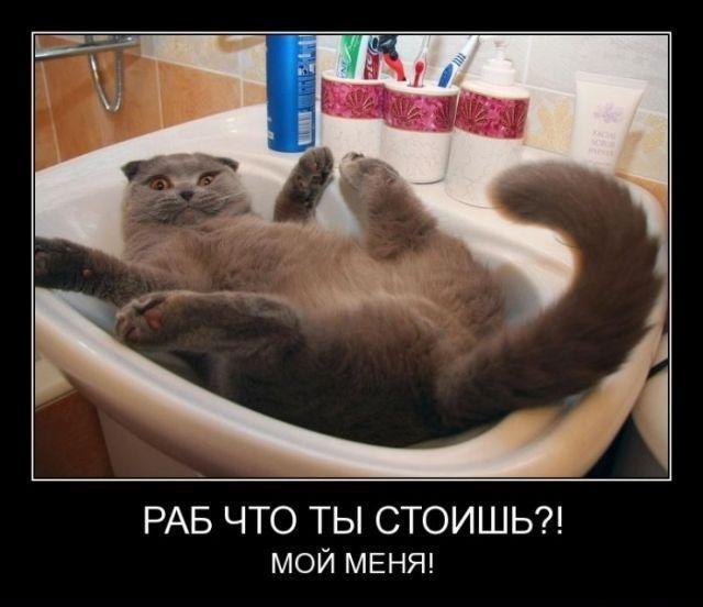 ТОП лучших демотиваторов с котами