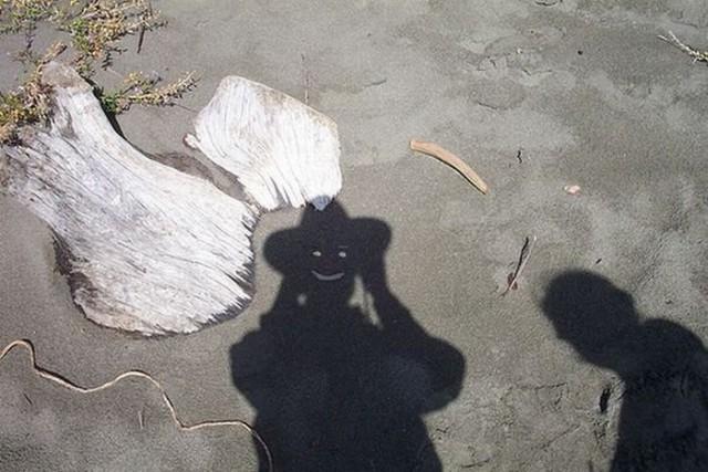 Веселые живые тени