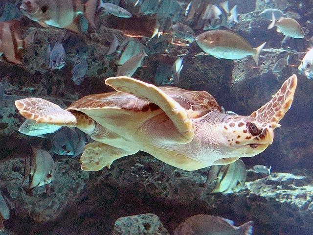 Океанариумы мира: AQWA, Австралия