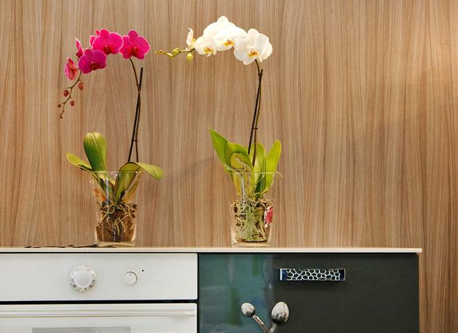 Как пересадить орхидеи в домашних условиях
