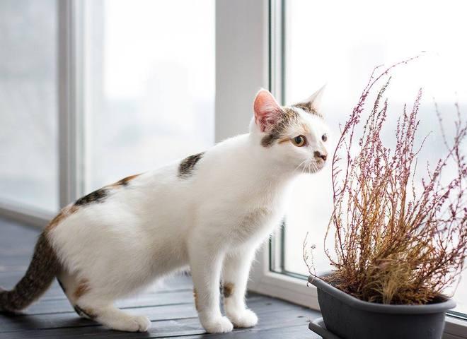 """Благотворительного календаря мини-приюта """"Кошкин дом"""": 15 бездомных котов и 12 киевлянок стали модел"""