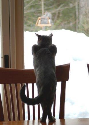 Свежая подборка котов