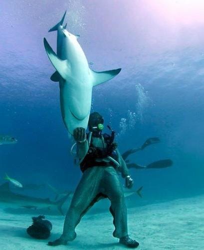 Укротитель акул О_о