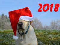 Милые открытки на Новый год собаки 2018