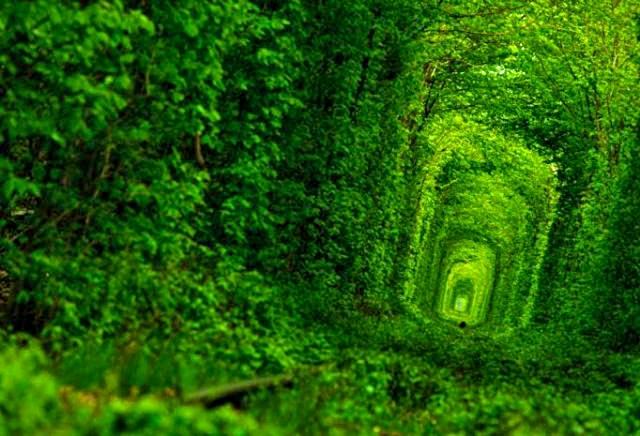 Тунель любові в Рівне