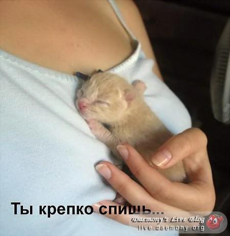 Усыпалка для котят и не только.