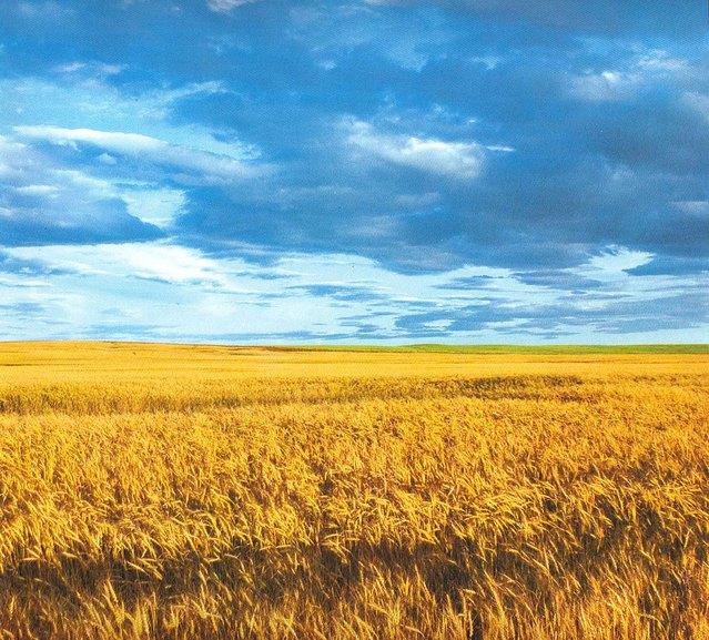 Ураинское поле
