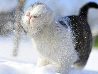 Первый снег HD
