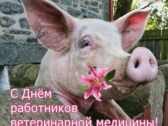 Поздравительные открытки с днем ветеринара