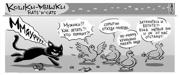 Комикс про кота и куриц
