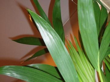 Кімнатні рослини: часті помилки у догляді