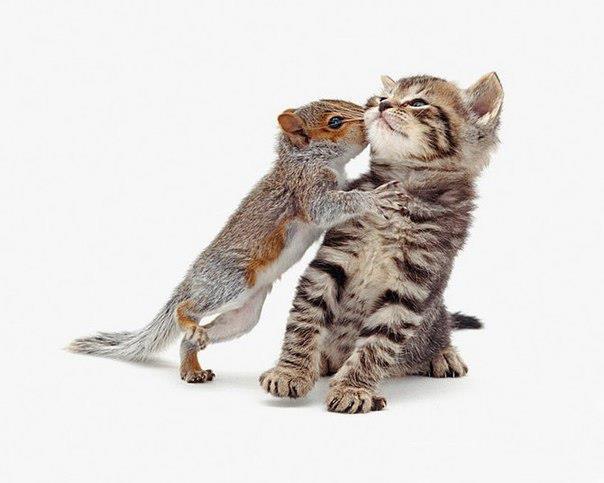 Котаны-друганы. Забавные фотографии животных от фотографа Jane Burton.