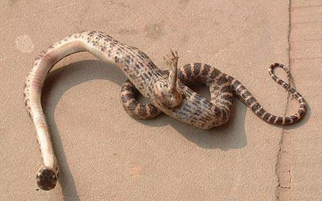 О, чудо - Змей Горыныч!