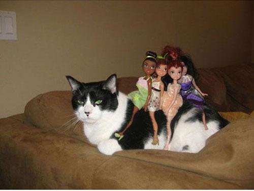 Коты, постигшие Дзэн