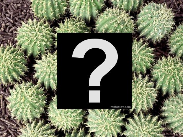 Фотозагадка кактусы. Угадайте что на фото