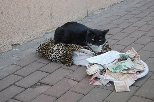 На что котэ собирает деньги?