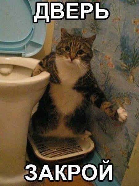 Няшка в туалете