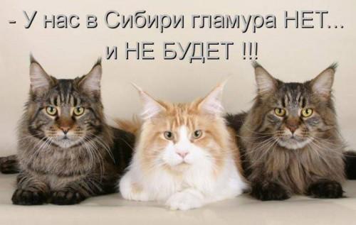 Веселые котоматрицы