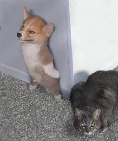 Подозрительный котэ. Главное, не попасться..