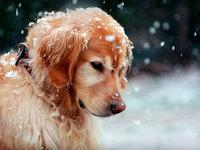 Собачка и первый снег