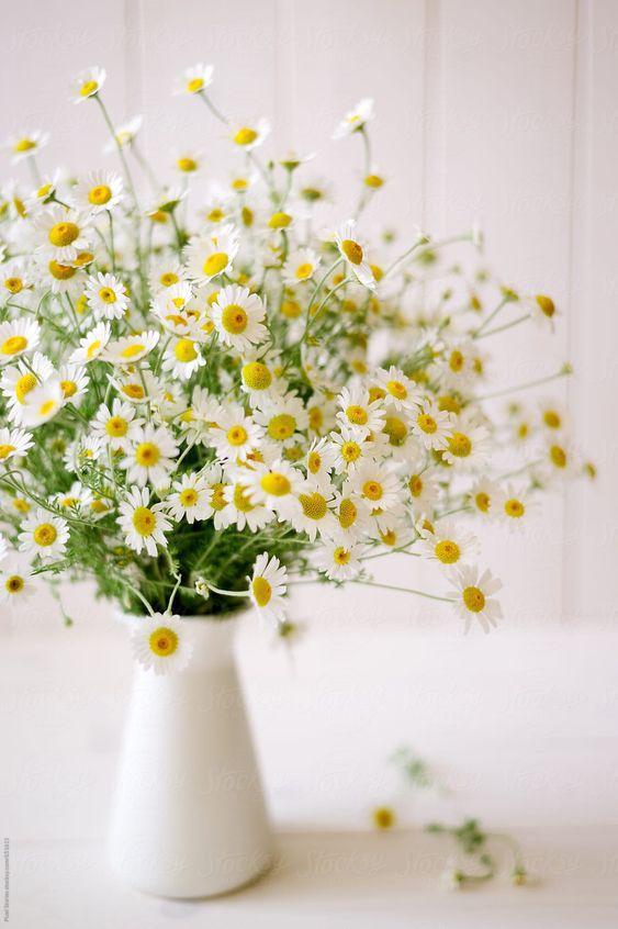 Цветы для каждого знака зодиака