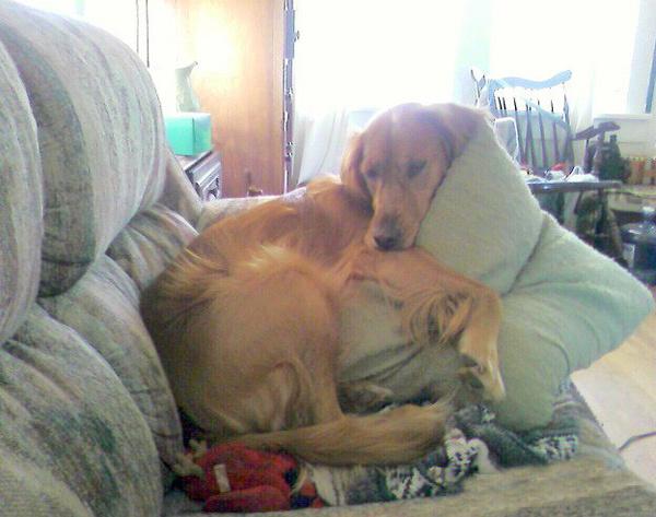 Тяжелое собачье утро