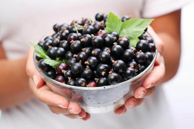Вино із чорної смородини: перетворюємо ягоди в вино - tochka.net