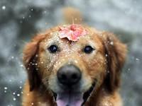 Снежное настроение
