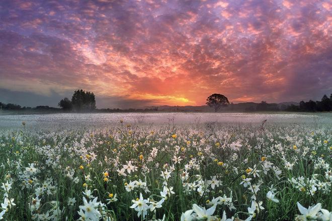 Куди поїхати в квітні в Україні: знайди свій квітковий рай