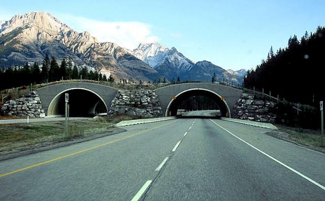 Мосты для животных: Национальный парк Банф