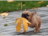 Я дарю тебе листочек