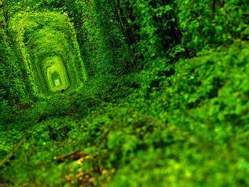 Тоннель любви в Ровно