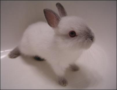 Кролики это не только ценный мех