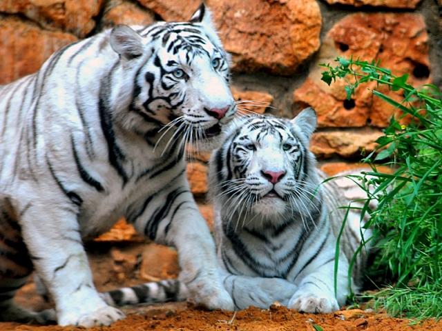Достопримечательности Хайфы: зоопарк Ган аЭм