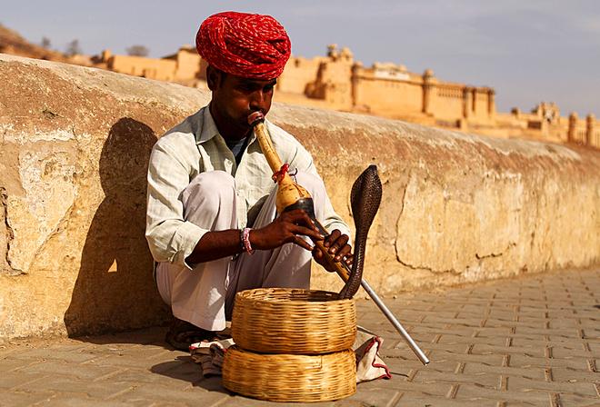Умом Индию не понять: заклинатели змей
