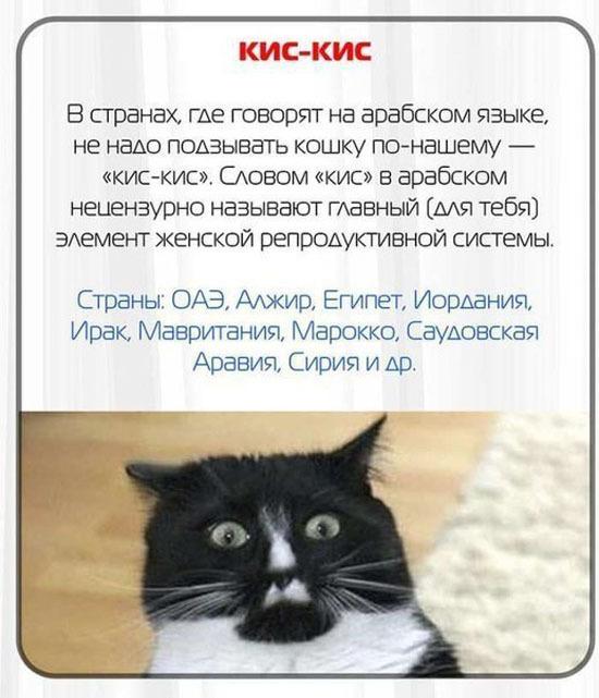 Подборка интересных фактов для русских