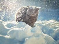 Пушистый кот в снегу
