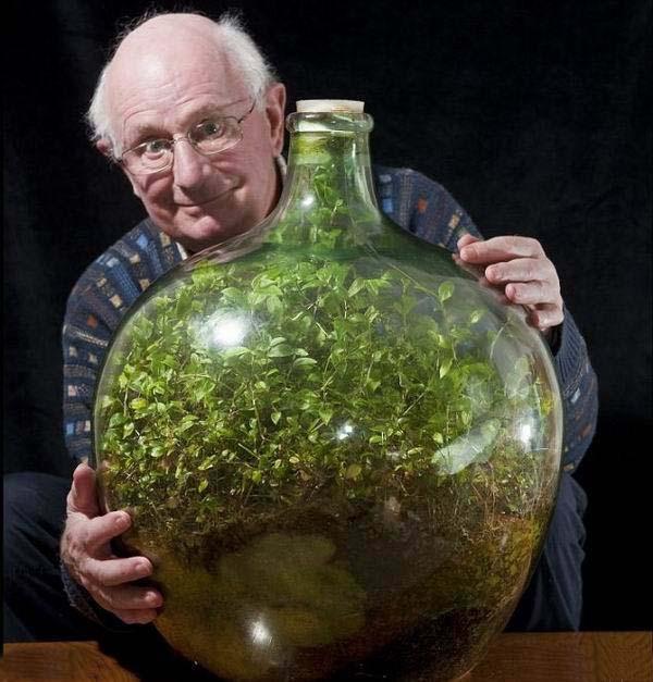 40-летняя экосистема в закупоренной бутылке.